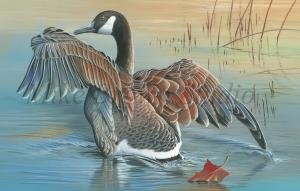 Mike Brown Named Winner Of The 2015 Iowa Duck Stamp Competition